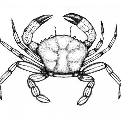 Joanne-Glover_Velvet-Crab