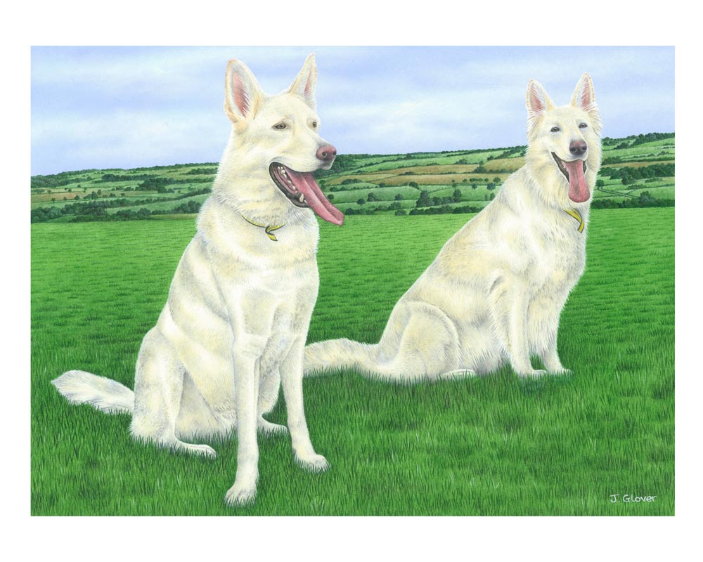 Joanne-Glover_White-German-Shepherds