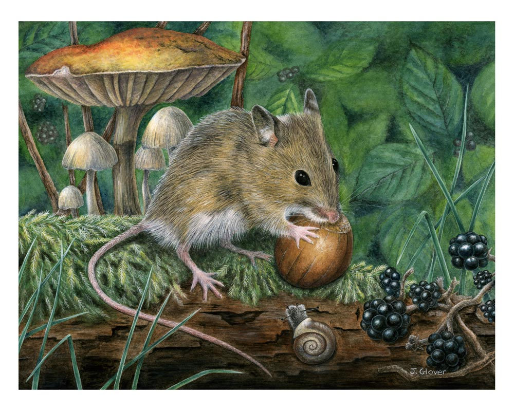 Joanne-Glover_Wood-Mouse
